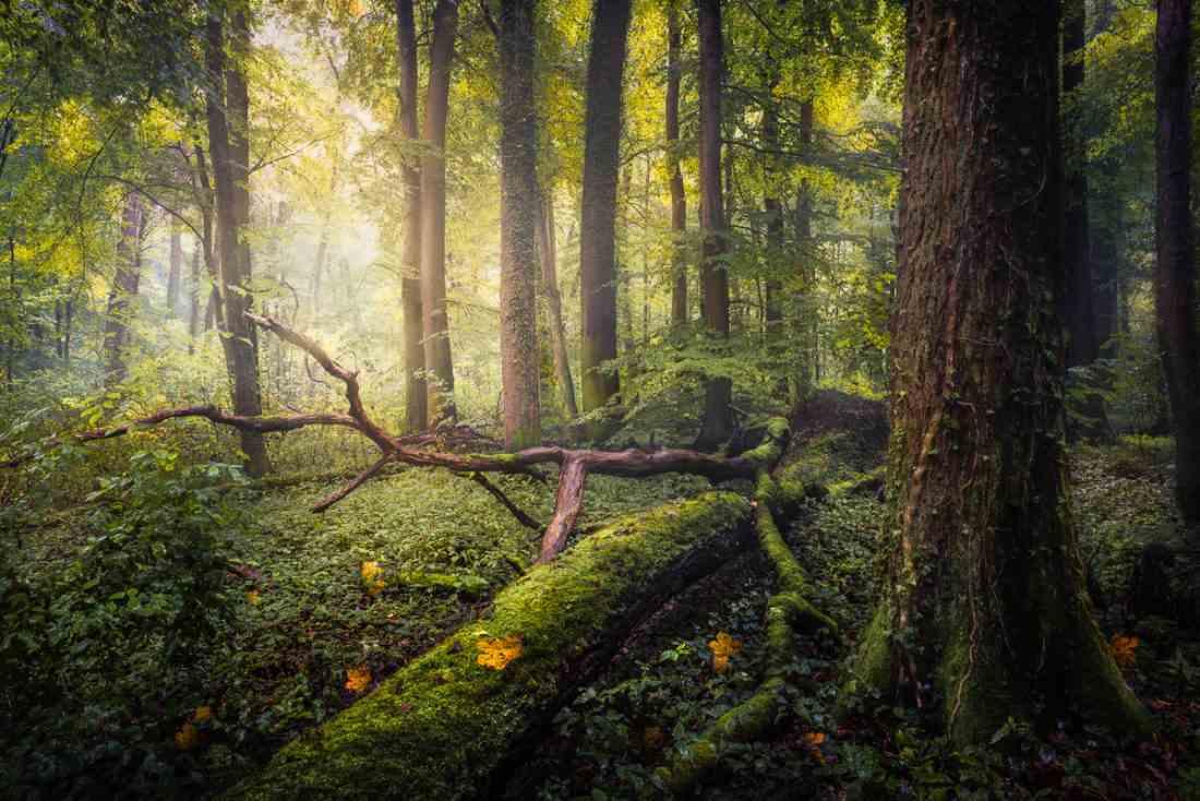 در عکاسی جنگل